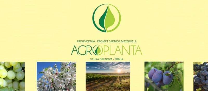 vocne-sadnice-agroplanta-1