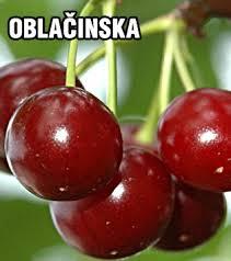 OBLACINSKA