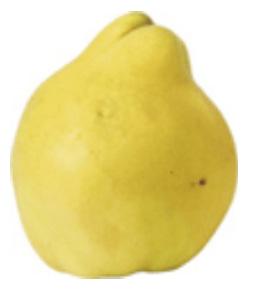 dunja-hemus
