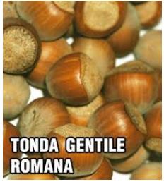 lesnik-tonda