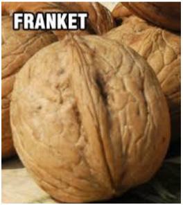orah-franket