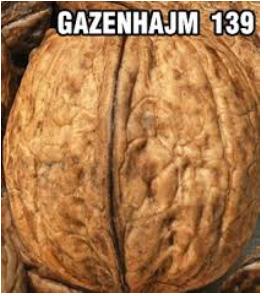 orah-gazenhajm