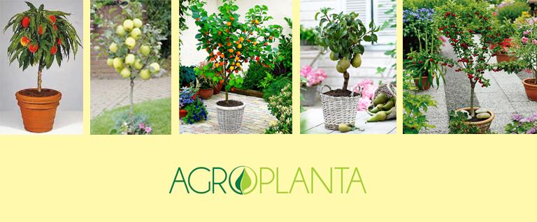 vocne-sadnice-minivoce-rasadnik-agroplanta