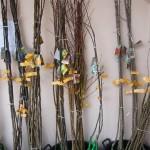 vocne -sadnice-agroplanta-2